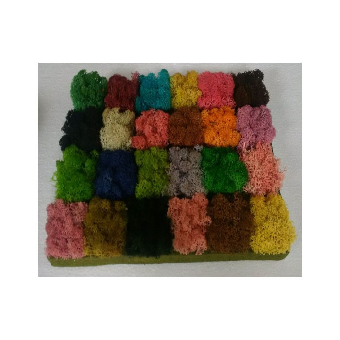 Lichens moss & color palette