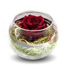 Bol with burgundi rose