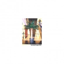 Phoenix Palm Tree 2