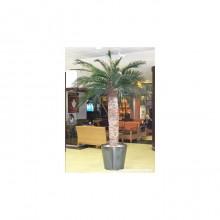 Phoenix Palm Tree 7