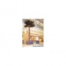 Washingtonia Palm Tree 1