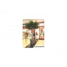 Washingtonia Palm Tree 2