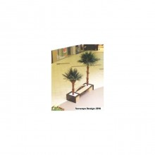 Washingtonia Palm Tree 4