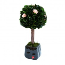 Small tree with pink roses