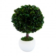 Small tree in round white pot