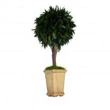 Small tree in elegant pot