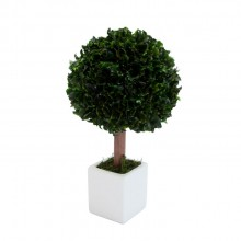 Small tree in square white pot