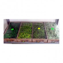 Lichens moss 500gr