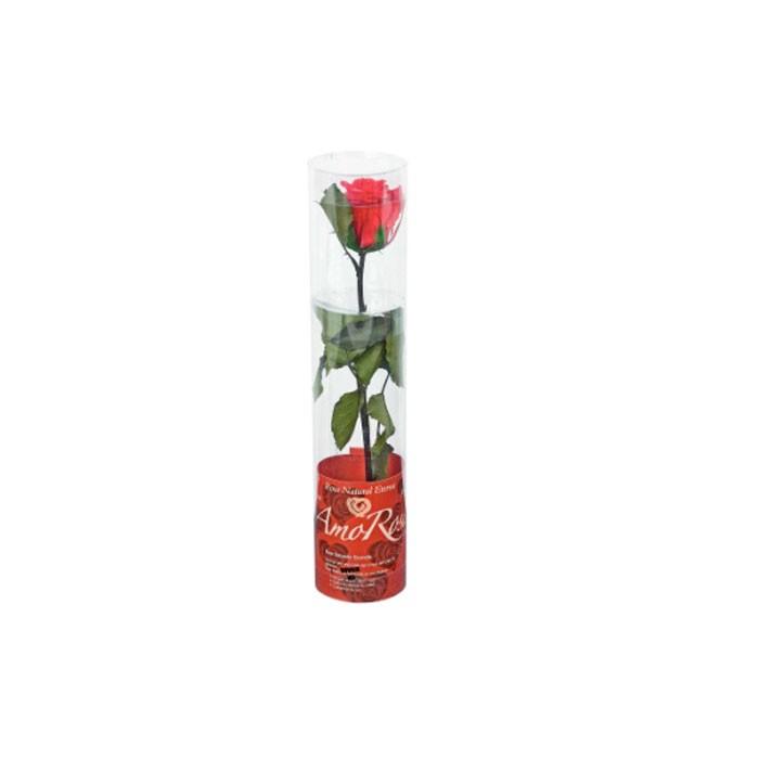 Mini Trandafir in ambalaj de tip cadou