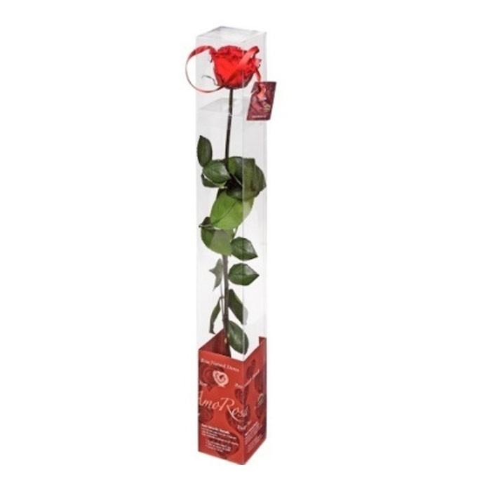 Trandafir Standard in ambalaj tip cadou