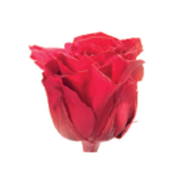 Trandafir Premium