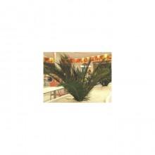 Planta Palmier 1