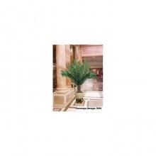 Planta Palmier 2