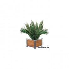 Planta Palmier 3