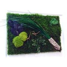 Tablou vegetal stabilizat 6