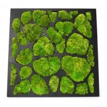 Tablou vegetal 50x50cm